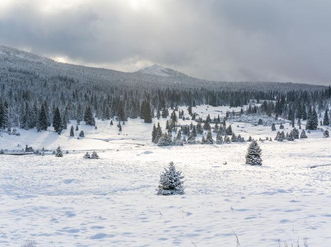 Šumava, zasněžené krásné údolí