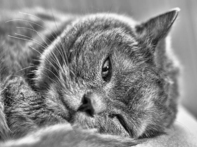Mezi spánkem a bděním