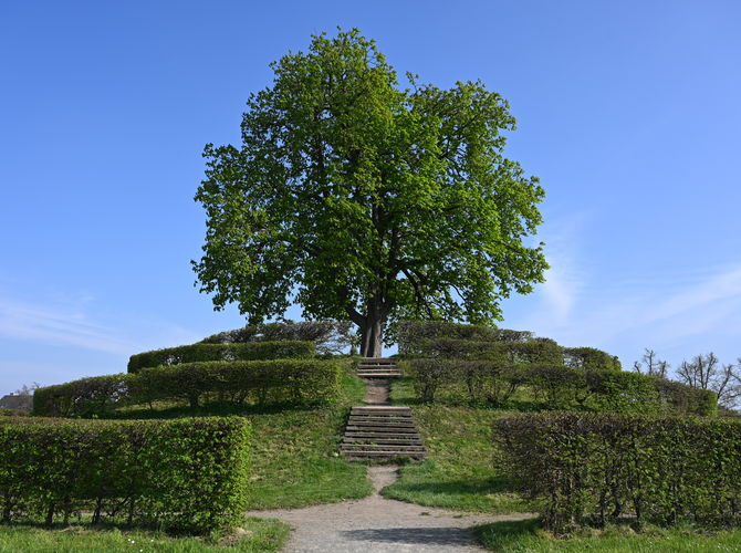 Cíl cesty - strom