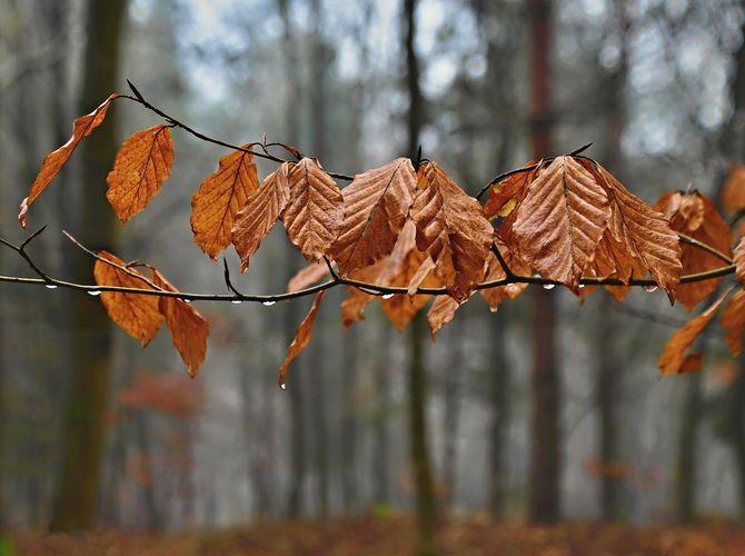 Podzim v lednovém lese