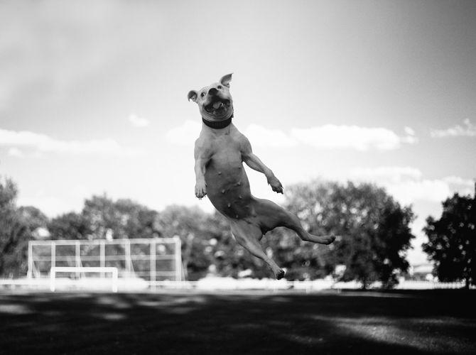 Létající Mia
