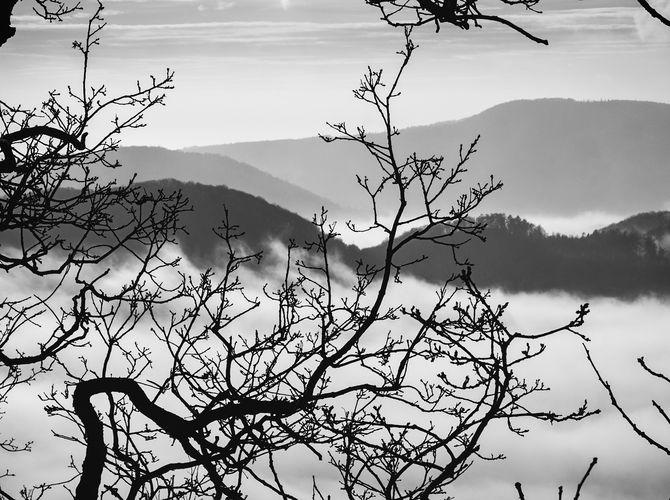 opelichaná mlha