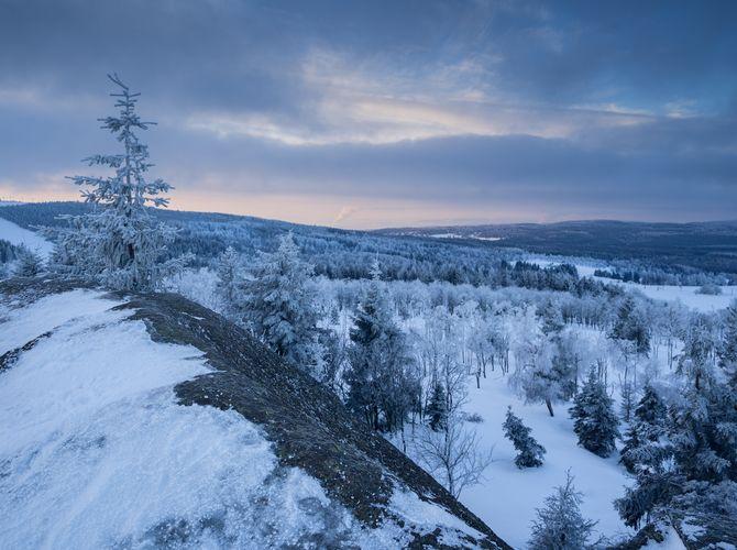 Zimomřivý východ II.