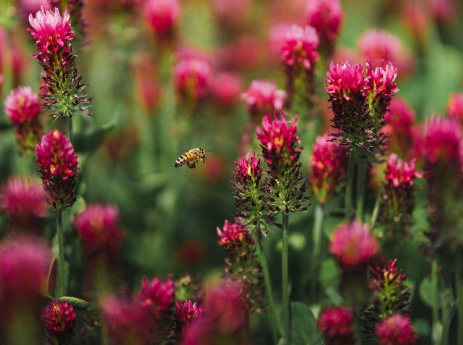 Včelí říše