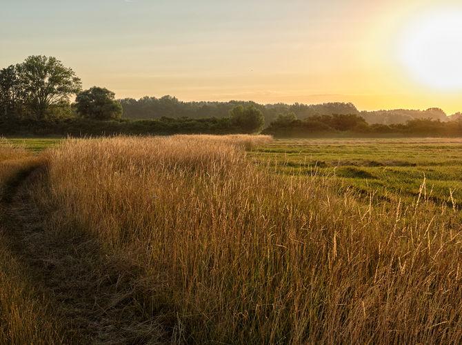 Svítání nad polem