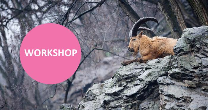 Přijďte se naučit fotografovat zvířata na workshop s Fujifilmem