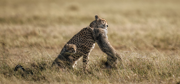 Jak a čím fotit v divoké přírodě (zaměřeno na Sony)