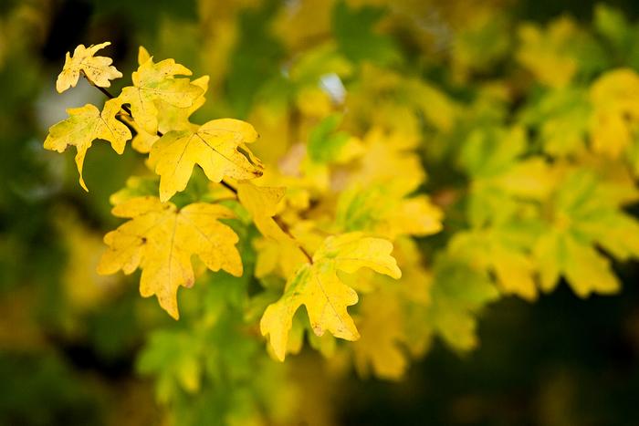 Lovcem barev aneb Jak fotit podzimní listí