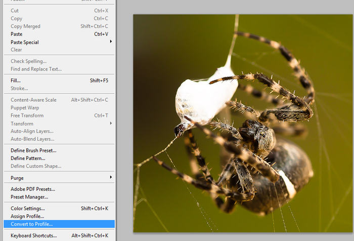 Jaký prostor vybrat: sRGB nebo Adobe RGB