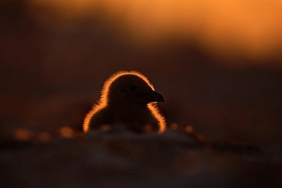 Ondřej Prosický - K fotografování divokých zvířat patří pokora