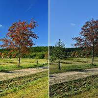 Jak fotit podzim