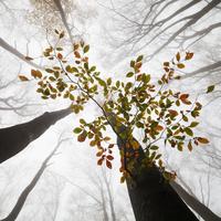 Epický průlom na poli ekologie! Fotografie, ze které vyroste les. Poznejte Photoleaf