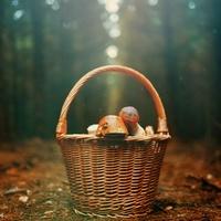 Jak fotit houby