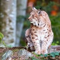 Fotografování zvířat - NP Bavorský les