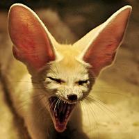 Máme rádi zvířata - 8. kolo celoroční fotografické soutěže odstartovalo