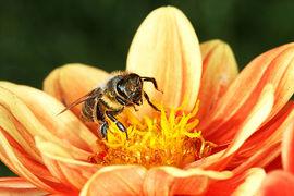 Veronika Souralová, fotoreportérka hmyzí říše