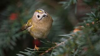 Jak fotit drobné ptáky: Rady a tipy z praxe