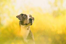 Fotografujeme psy - jak na to