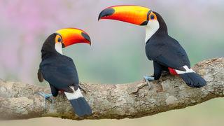 Rozhovor: Petr Bambousek - Focení v Pantanalu