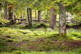Kurz focení zvířat v NP Bavorský les - jak to šlo?