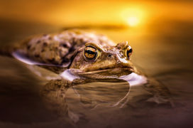 10 nejlepších wildlife fotek podle Petra Bambouska