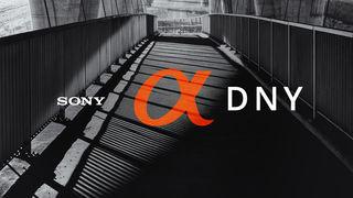 Oblíbené Sony Alpha dny jsou opět tady a s nimi zajímavé workshopy a skvělé slevy