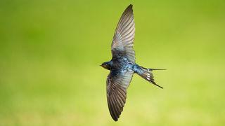 Zálibou ambasadora Sony Petara Sabola je focení ptáků za letu