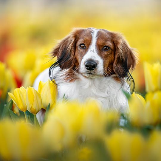 Jarní obrození