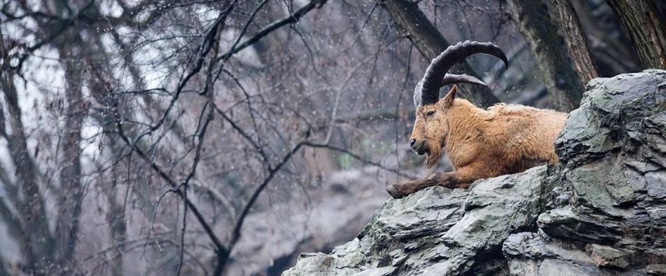Workshop wild life fotografie s Fujifilmem