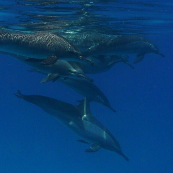 5 tipů na focení pod mořskou hladinou