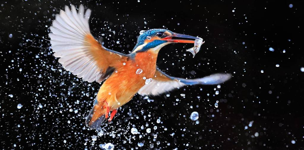 eos_1d_x_mark_ii_kingfisher_tcm126-1345853