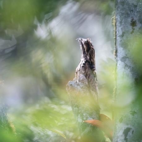 Čím fotí zvířata garant soutěže Petr Bambousek