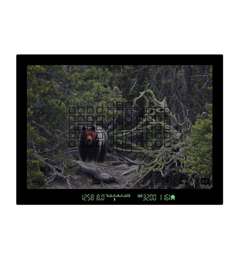 5d-mark-iv-bear-viewfinder