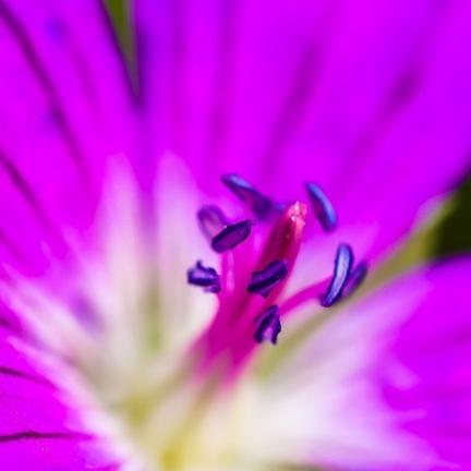 Jak fotit květiny, tedy statické makro