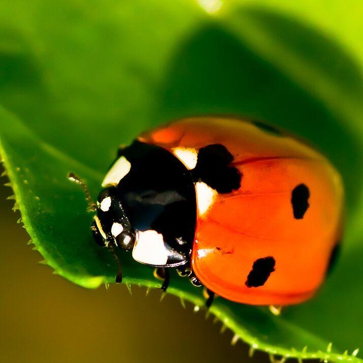 Jak fotit hmyz, tedy dynamické makro scény