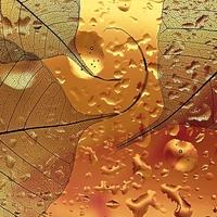 Výtvarná makrofotografie / 5. kolo fotosoutěže odstartovalo