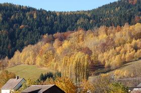 Loucna-podzim-2-.jpg