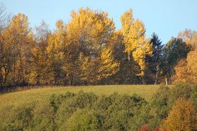 Loucna-podzim-3-001.jpg